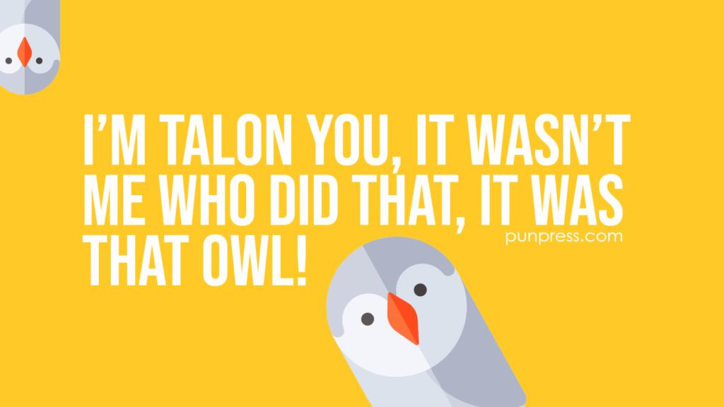 i'm talon you, it wasn't me who did that, it was that owl - owl puns