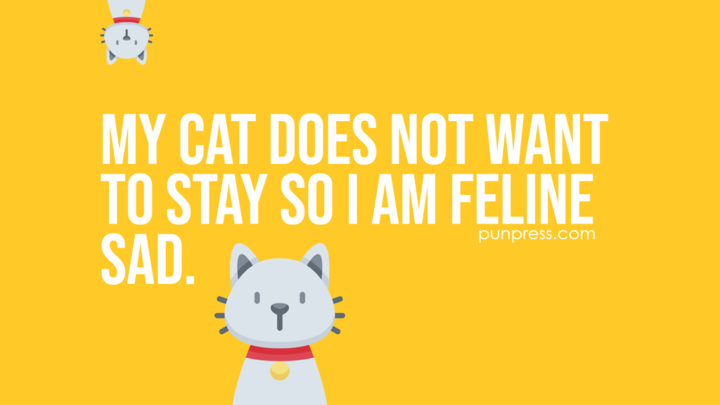 my cat does not want to stay so I am feline sad - cat puns